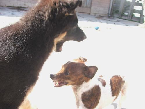Canine Communication, Focus and Impulse Control