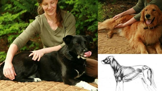 Helping Your Dog's Hips and Hind End