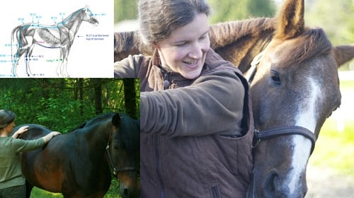 Equine Back Pain to Back Health