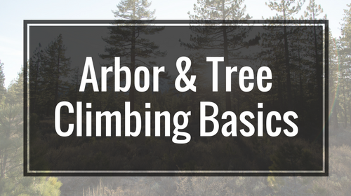 Arbor & Tree Climbing Basics