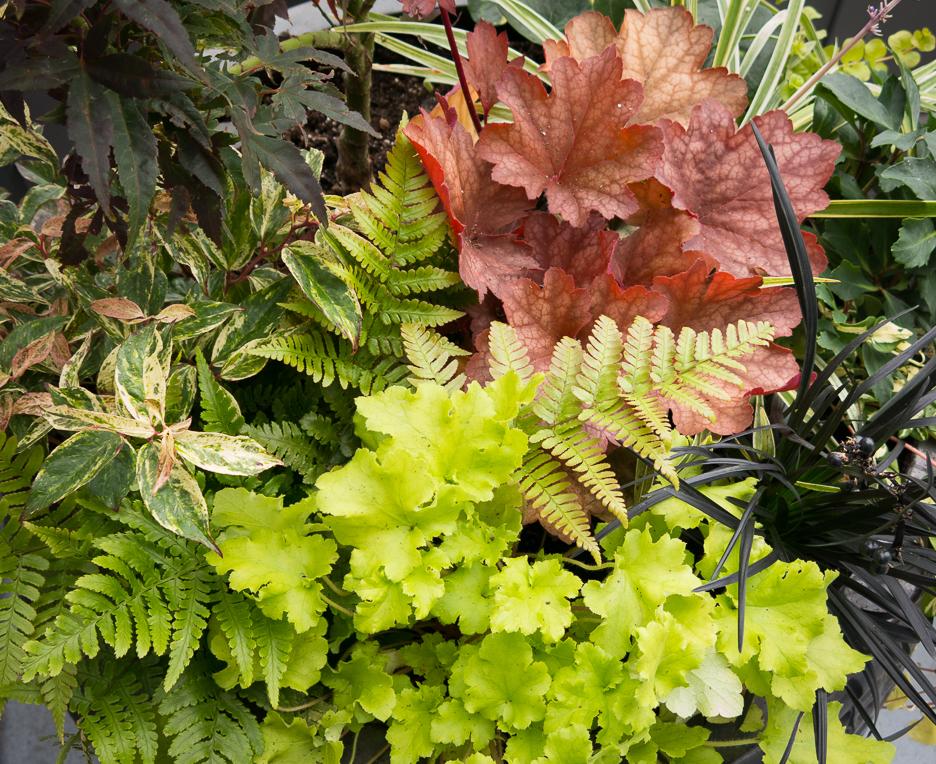 Secrets to Selecting Low Maintenance Plants
