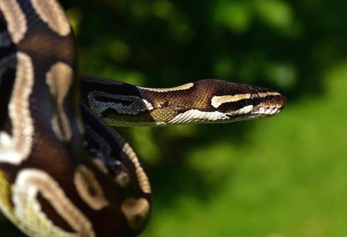 4. Visual Studio Code for Python Develeopers