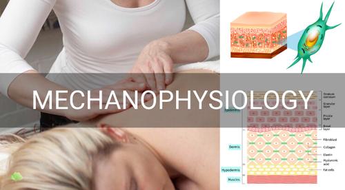 Mechanophysiology