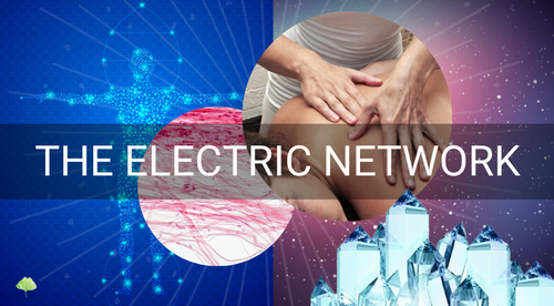 The Electric Network