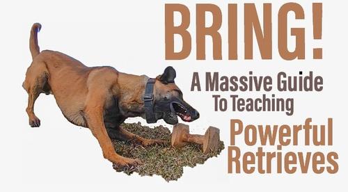 BRING! A Massive Guide To Teaching Powerful Retrieves