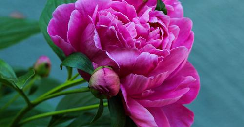 Kuidas vanast lillepeenrast uut kujundada?