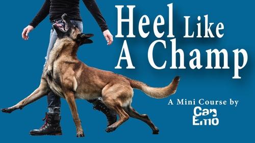 Mini- Course- Heel Like A Champ!