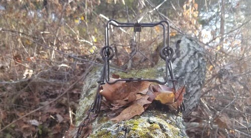 SURVIVAL TRAPPING: How to Use, Set, and Feed Yourself with the Conibear Trap
