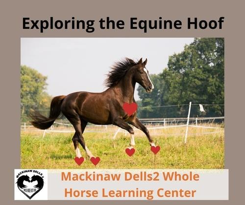 Exploring the Equine Hoof, Online