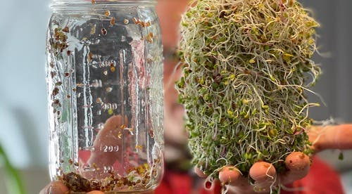 SURVIVAL SPROUTING: How to Sprout Your Own Greens During a BUG IN Disaster